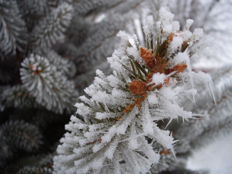 frost-962202_1920